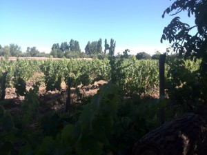 Image of vineyard in Mendoza, Argentina