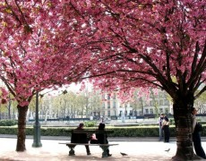 English Copywriter in Paris: 5 Parisian signs of Spring