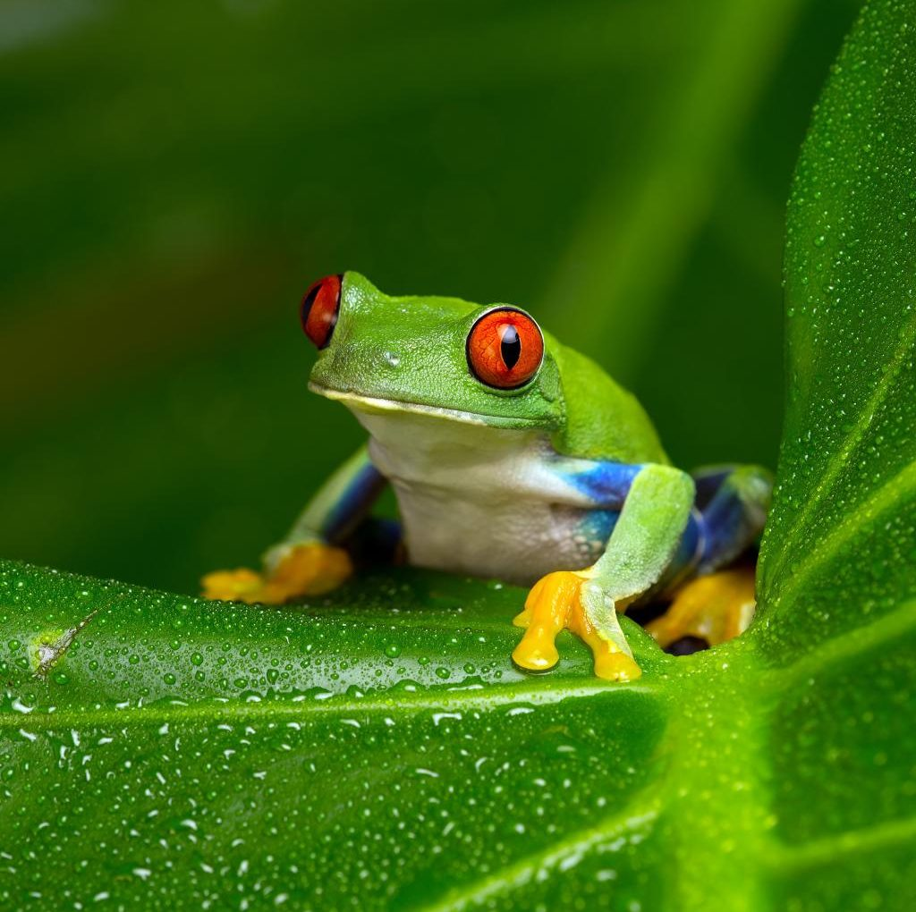 The 9 little things that tell me you're…a frog!